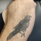 I knew I got this raven tattoo for some reason. 👍